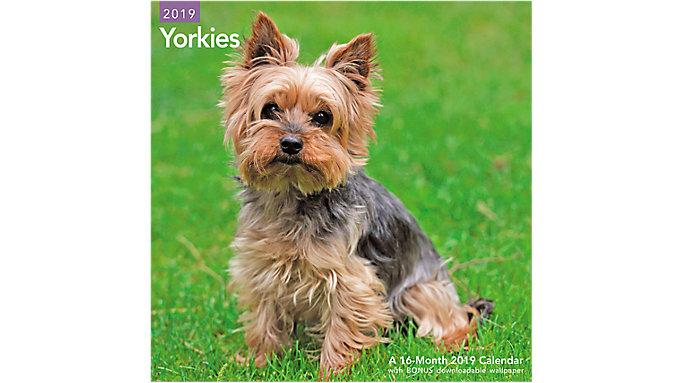 Mead Yorkies Wall Calendar  (LME323)