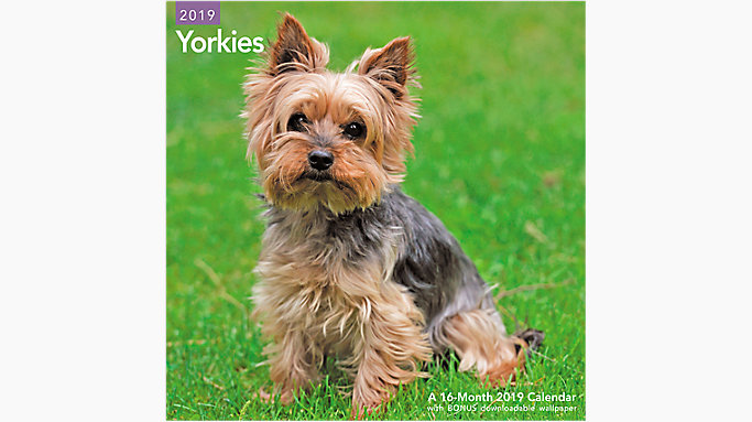 Yorkies Wall Calendar Lme323 Mead