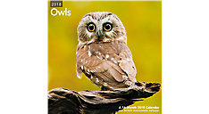 Owls Wall Calendar (Item # LME326)