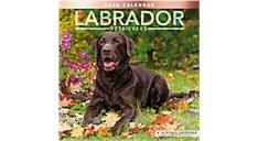 Labrador Retrievers 12x12 Monthly Wall Calendar (Item # LME341)