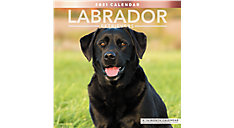 Labrador Retrievers 12x12 Monthly Wall Calendar (Item # LME341)