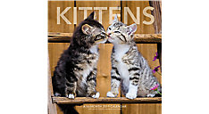 Kittens Wall Calendar (Item # LML704)