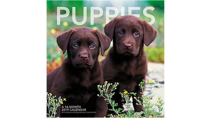Landmark Puppies Wall Calendar  (LML705)