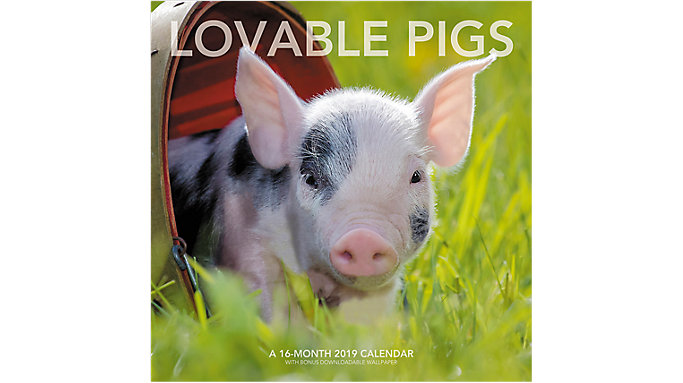 Landmark Lovable Pigs Wall Calendar  (LML743)