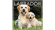 Labrador Retrievers Wall Calendar (Item # LML753)