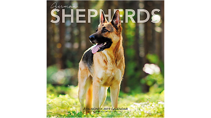 Landmark German Shepherds Wall Calendar  (LML756)