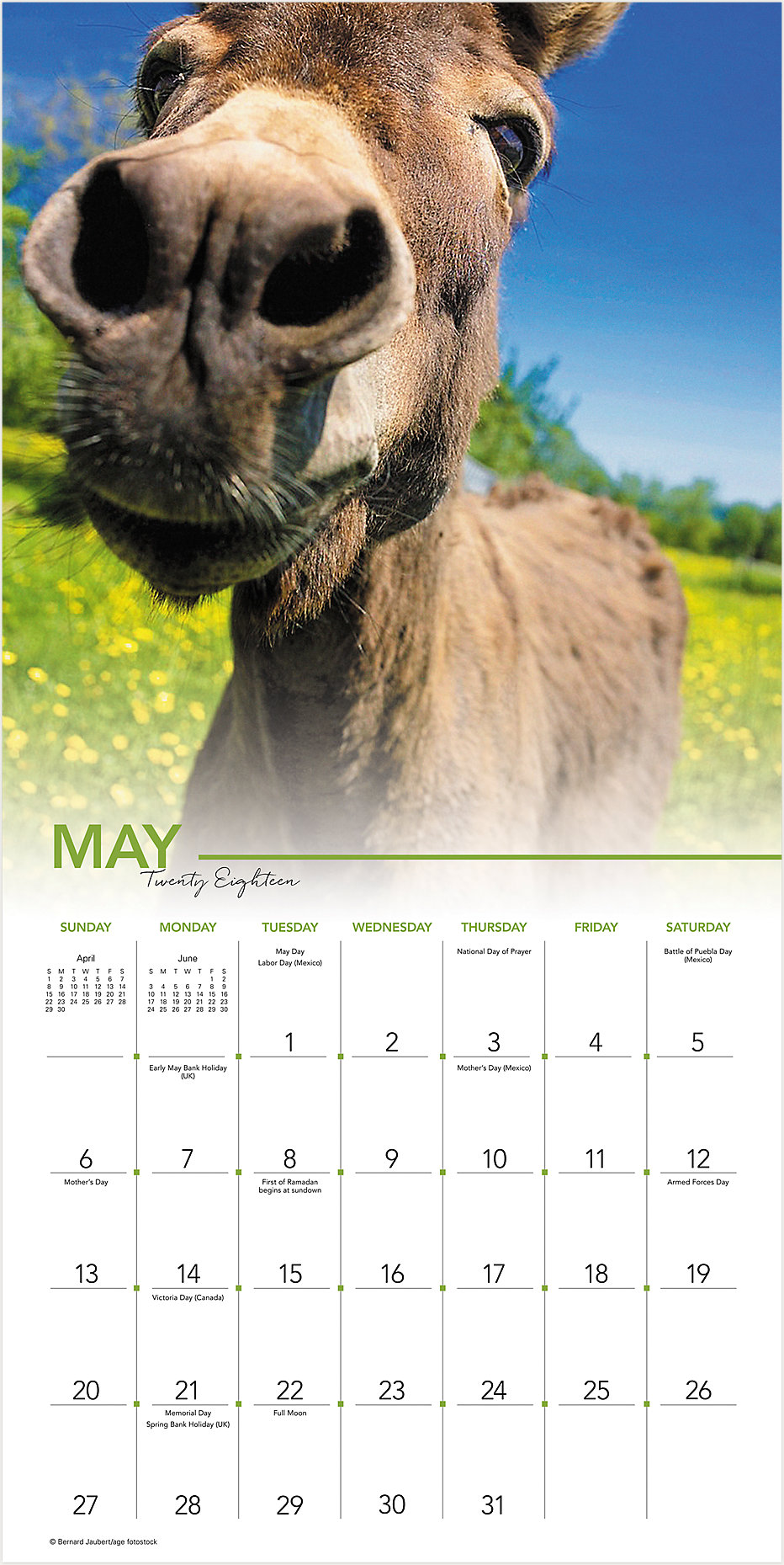 Scroll to Top Close Image Zoom. Back. Landmark Animal Selfies Wall Calendar  ...