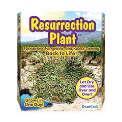 Dunecraft Resurrection Plant
