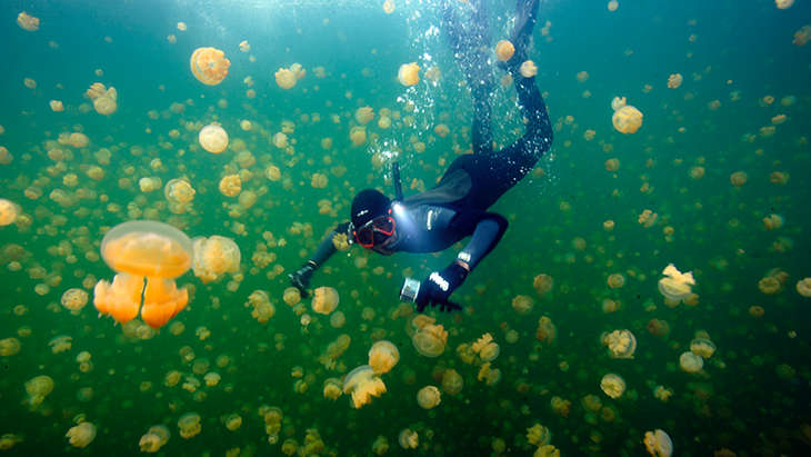 Diver JellyFish