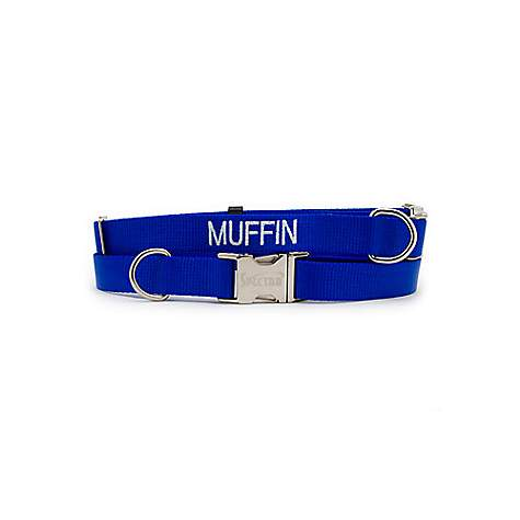 Coastal Pet Personalized Adjustable Nylon Spectra Collar in Blue