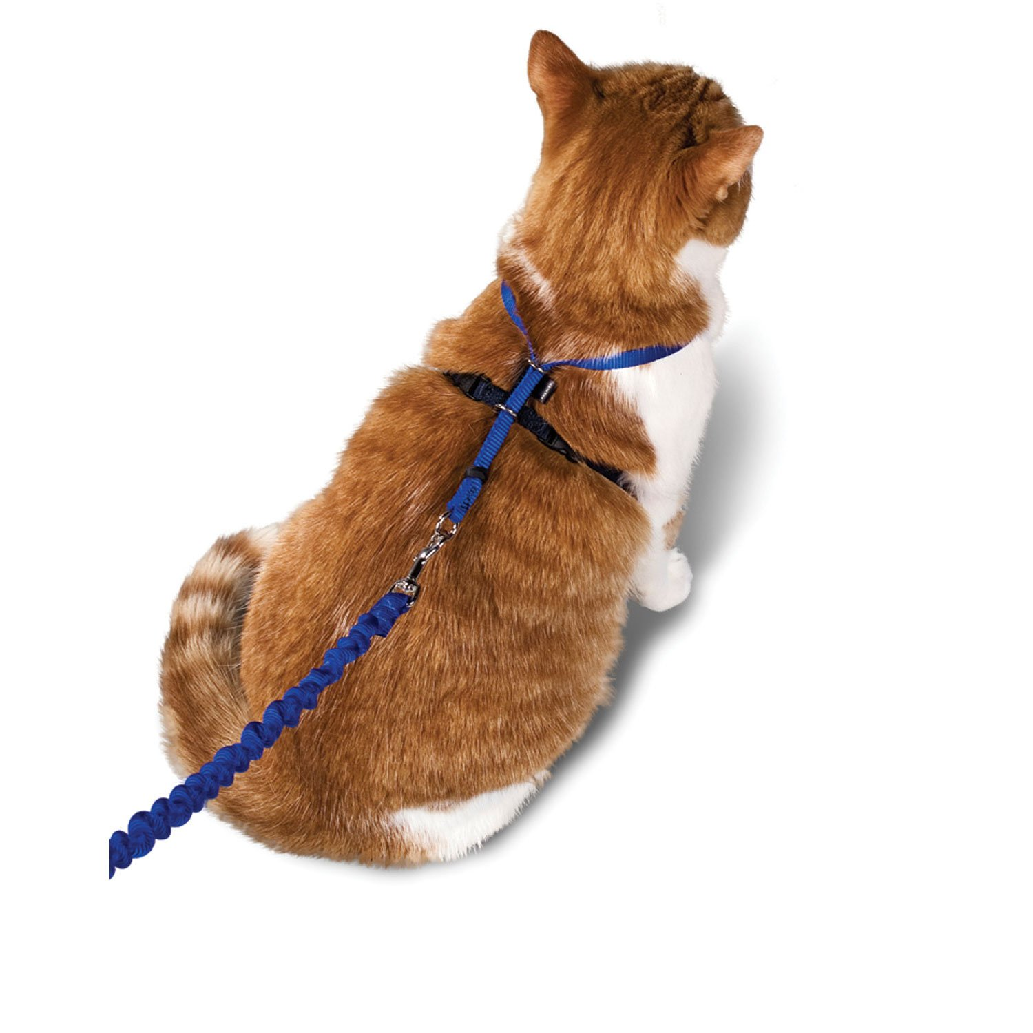 Image of PetSafe Gentle Leader Come with Me Kitty Harness & Bungee Leash, Small, Blue