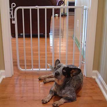 Cardinal Gates White Auto-Lock Pet Gate