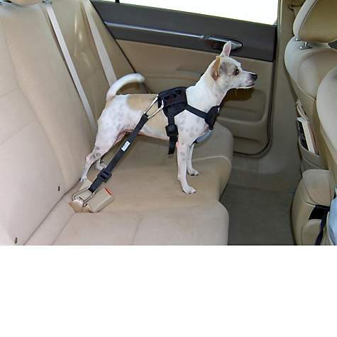 Bergan Auto Harness With Tether Dog Car Harness Petco