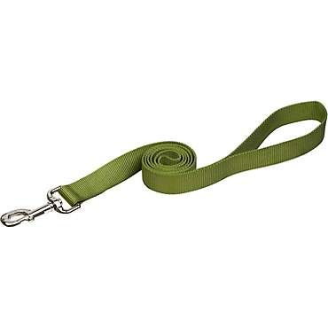 Coastal Pet Nylon Personalized Dog Leash in Palm Green, 5/8