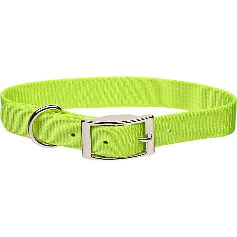 Coastal Pet Metal Buckle Nylon Personalized Dog Collar in Lime, 3/8