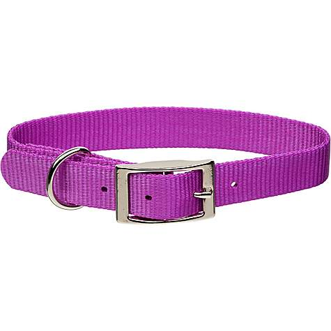 Coastal Pet Metal Buckle Nylon Personalized Dog Collar in Orchid, 3/4