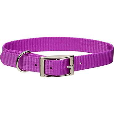 Coastal Pet Metal Buckle Nylon Personalized Dog Collar in Orchid, 5/8