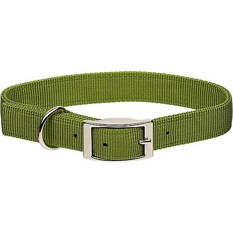Coastal Pet Metal Buckle Double Ply Nylon Personalized Dog Collar in Palm Green