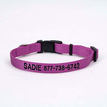 Coastal Pet Nylon Adjustable Personalized Dog Collar in Orchid