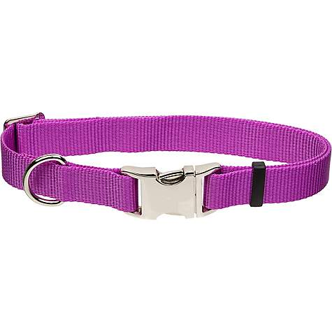 Coastal Pet Metal Buckle Nylon Adjustable Personalized Dog Collar in Orchid