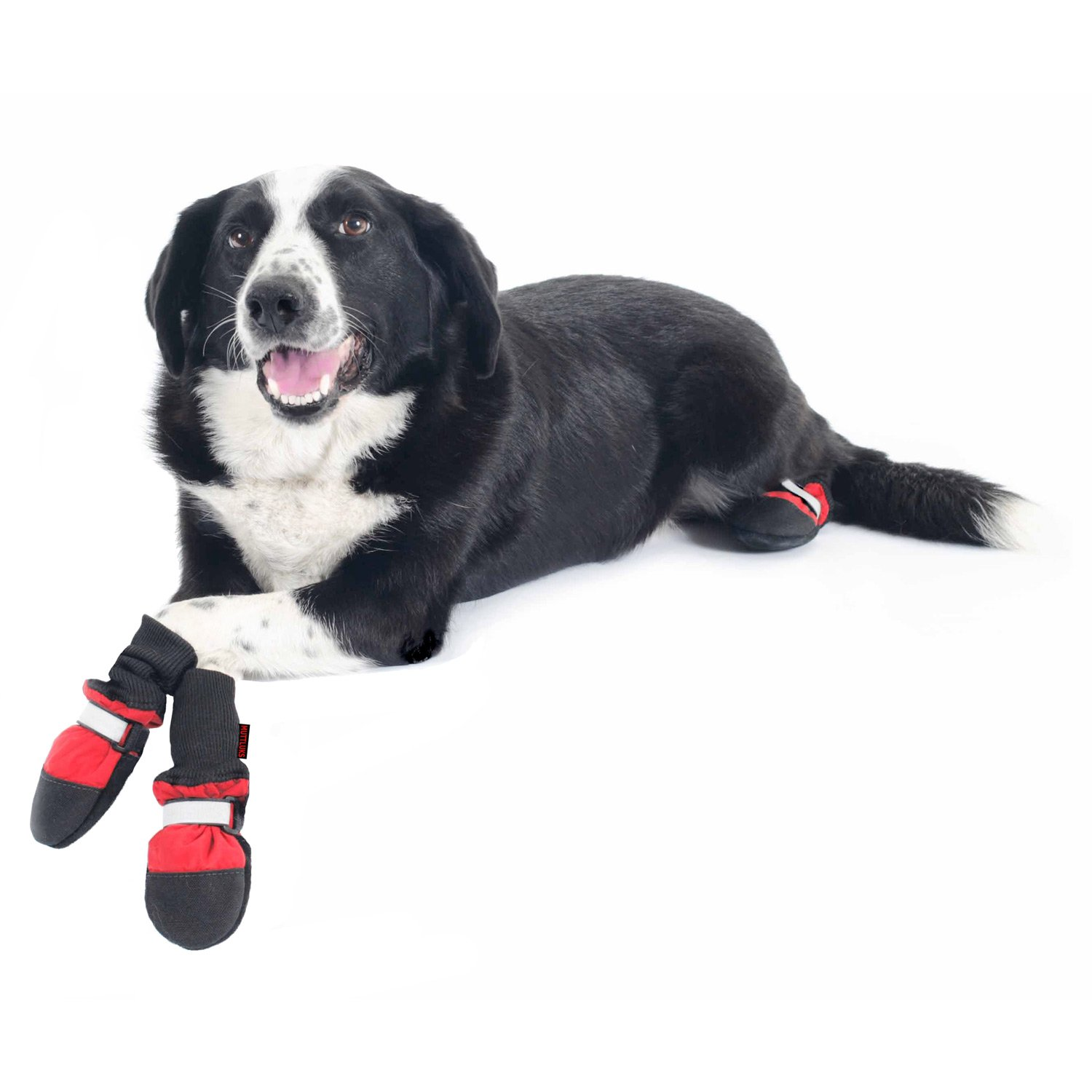 Dog Boots Shoes  Socks Puppy  Dog Booties Petco - Dog shoes for hardwood floors