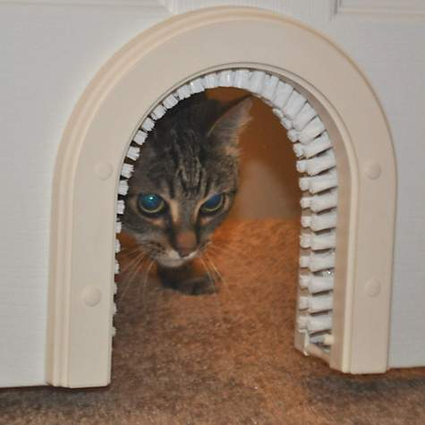 & Interior Cat Door: Cat-door Indoor Access Cat Door | Petco Pezcame.Com