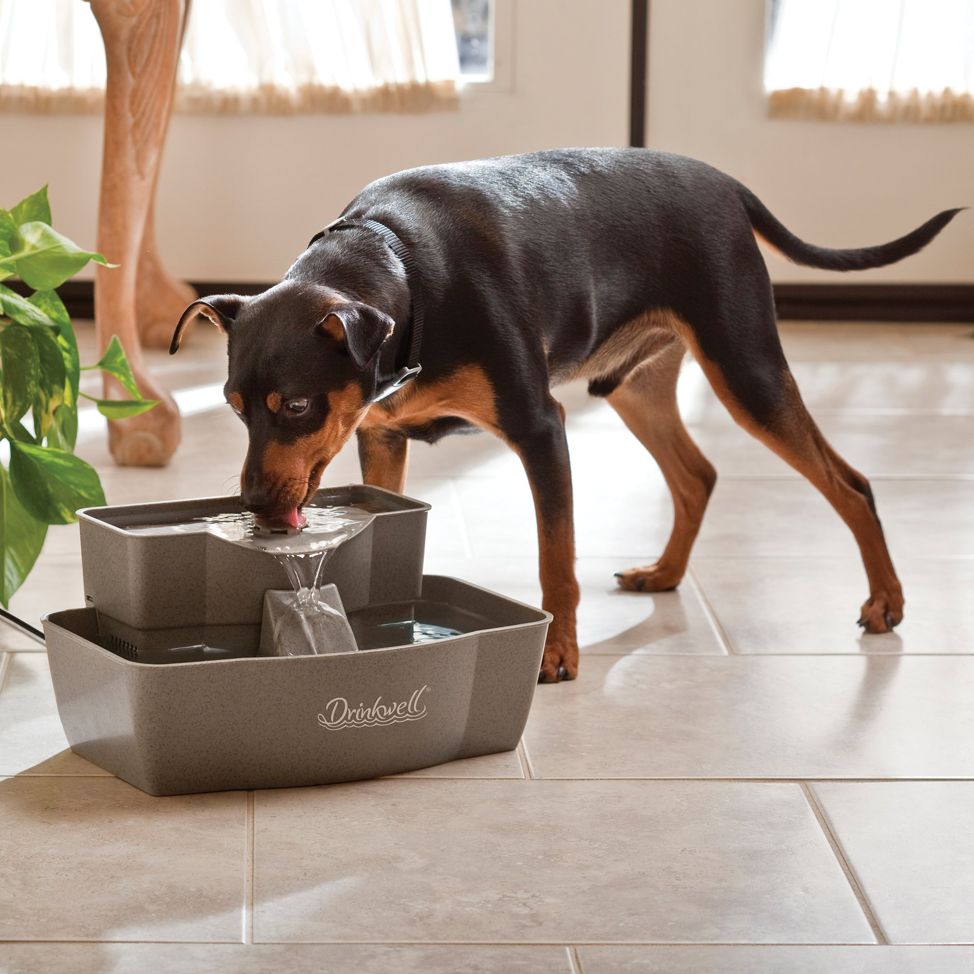 Dog Water Fountains & Automatic Dog Waterers | Petco