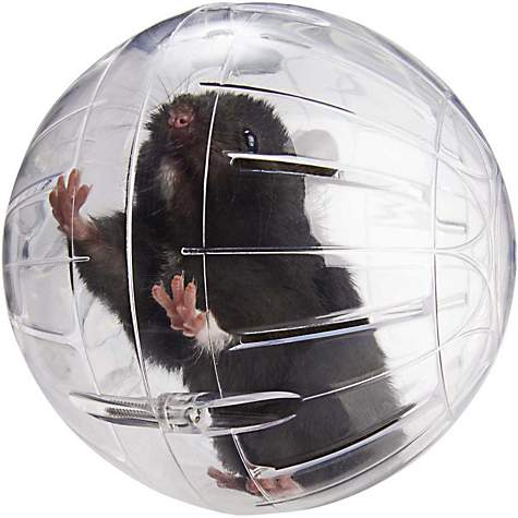 Lees kritter krawler small animal ball petco sciox Image collections