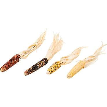 Brown's Tropical Carnival Mini Corn-on-the-Cob with Husks Foraging Treats