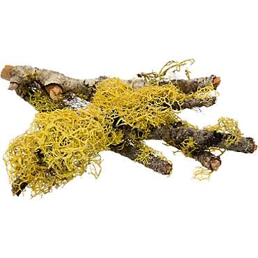 T-Rex Terra Accents Lichen Sticks