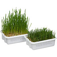 CatA'bout Cat Grass Plus