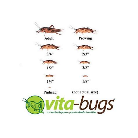 Vita-Bugs Prewing Live Crickets