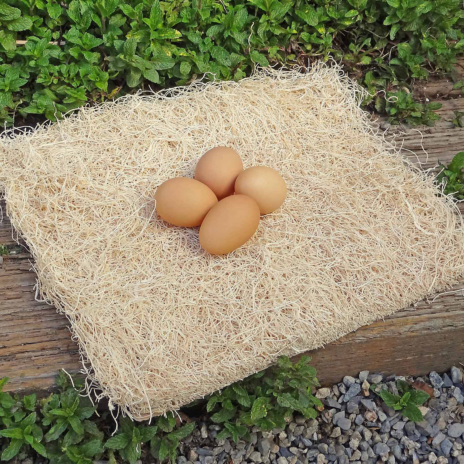 Precision Pet Excelsior Chicken Nesting Pads Pack Of 10 Pads