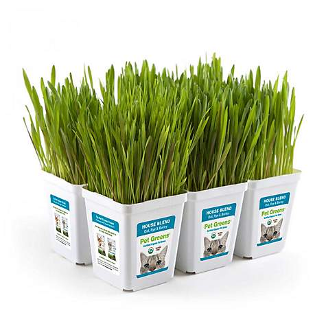Pet Greens House Blend Pet Grass