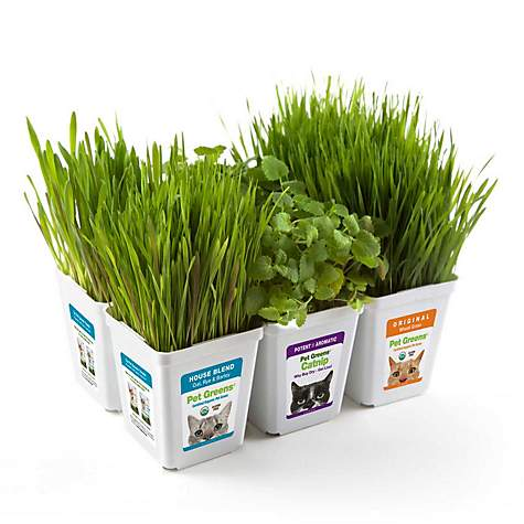 Gimborn Pet Greens Multi-Pack Pet Grass