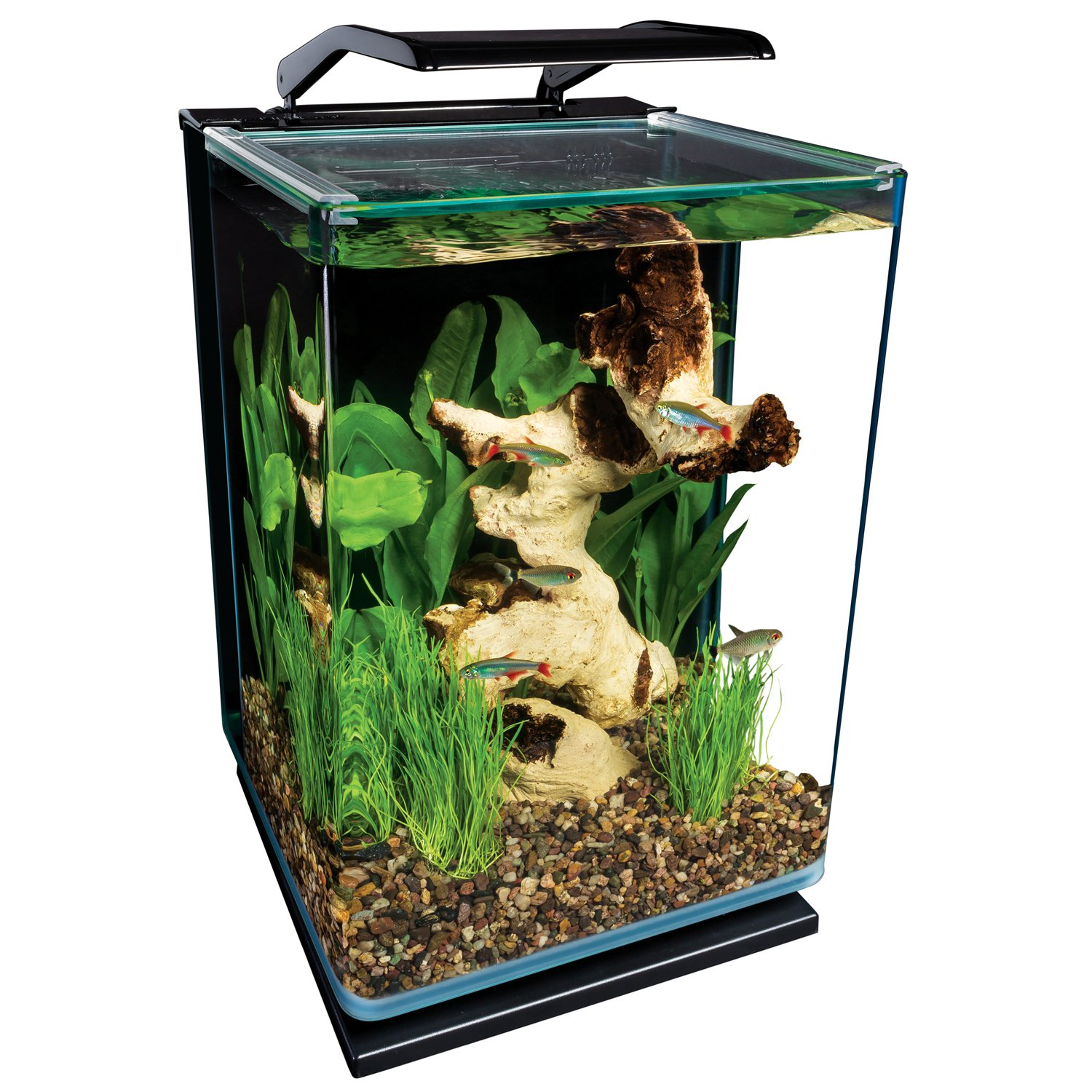 marineland portrait glass led aquarium kit petco