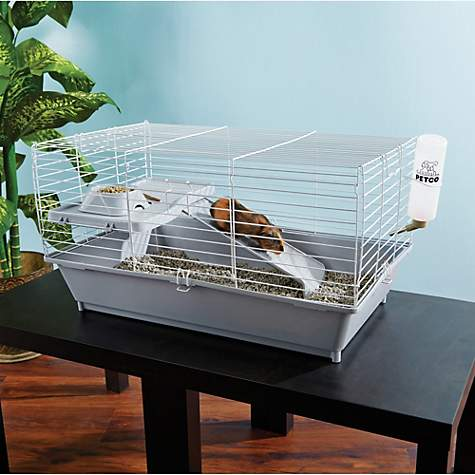 You & Me Guinea Pig Starter Kit