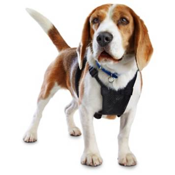 Good2go Black No Pull Dog Harness Petco