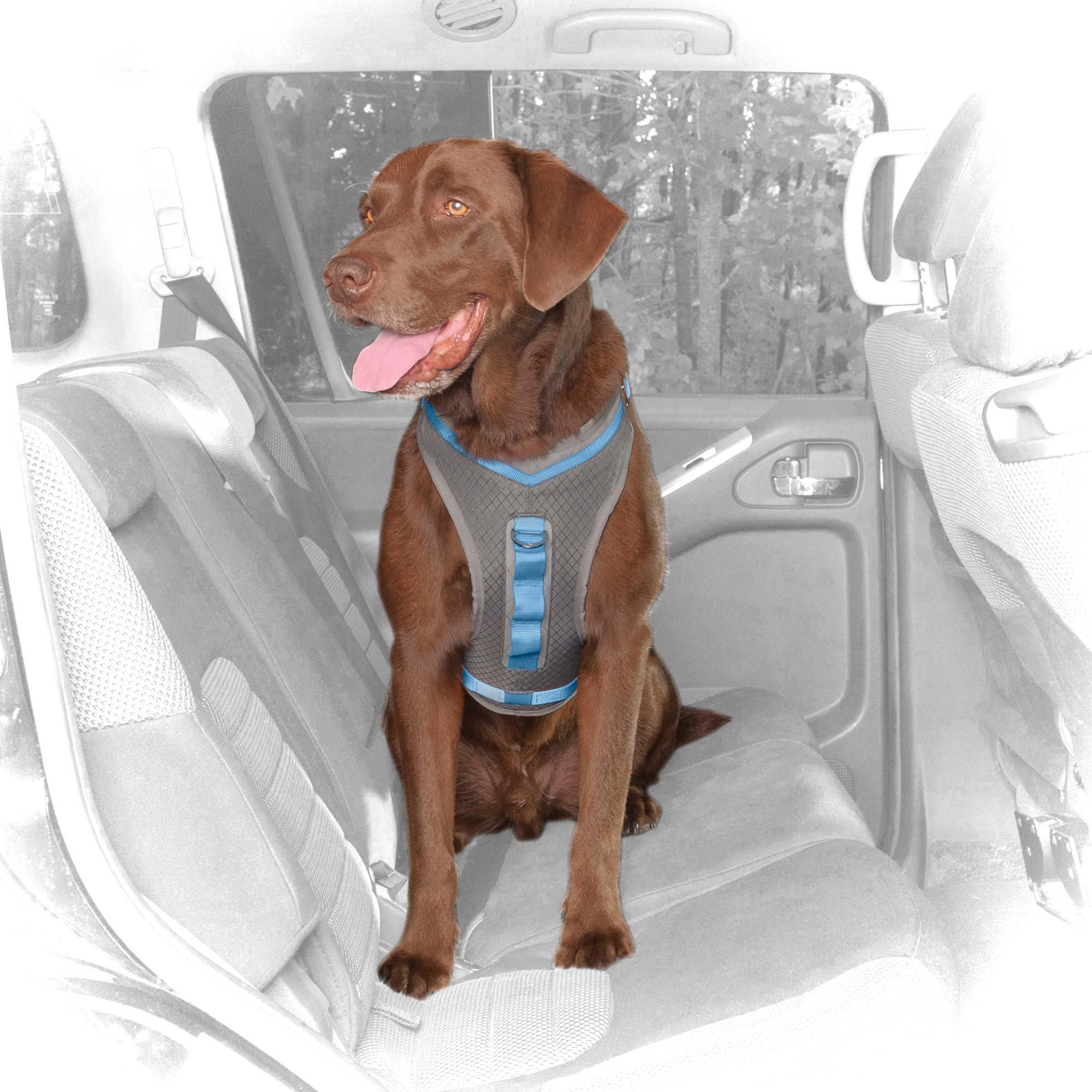 Dog Car Harnesses Seat Belts Restraints For Travel Petco
