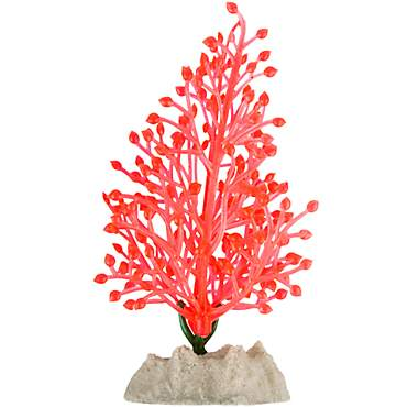 GloFish Orange Plant