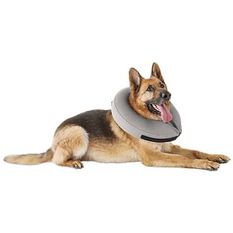 Inflatable Collar For Dogs Petco
