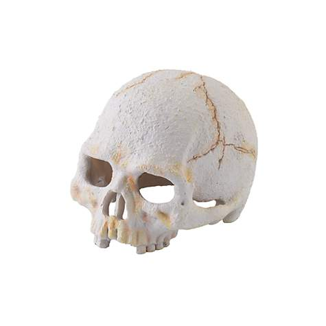 Exo-Terra Primate Skull Secure Hiding Place