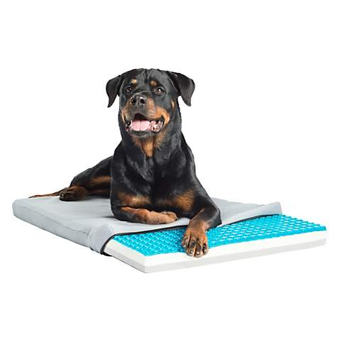 Image result for cooling technology for pet