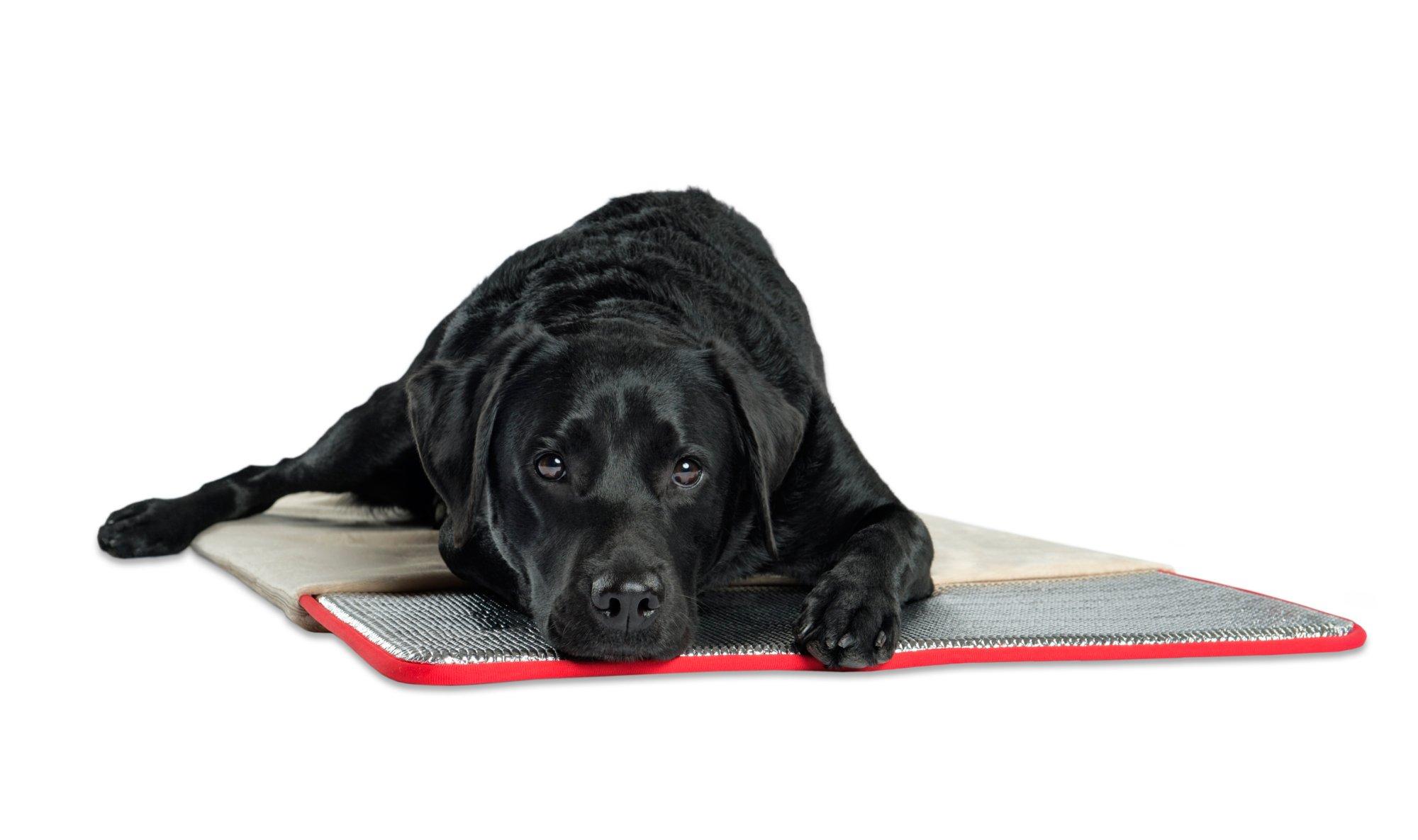 Pet Therapeutics TheraWarm Self Warming Pad