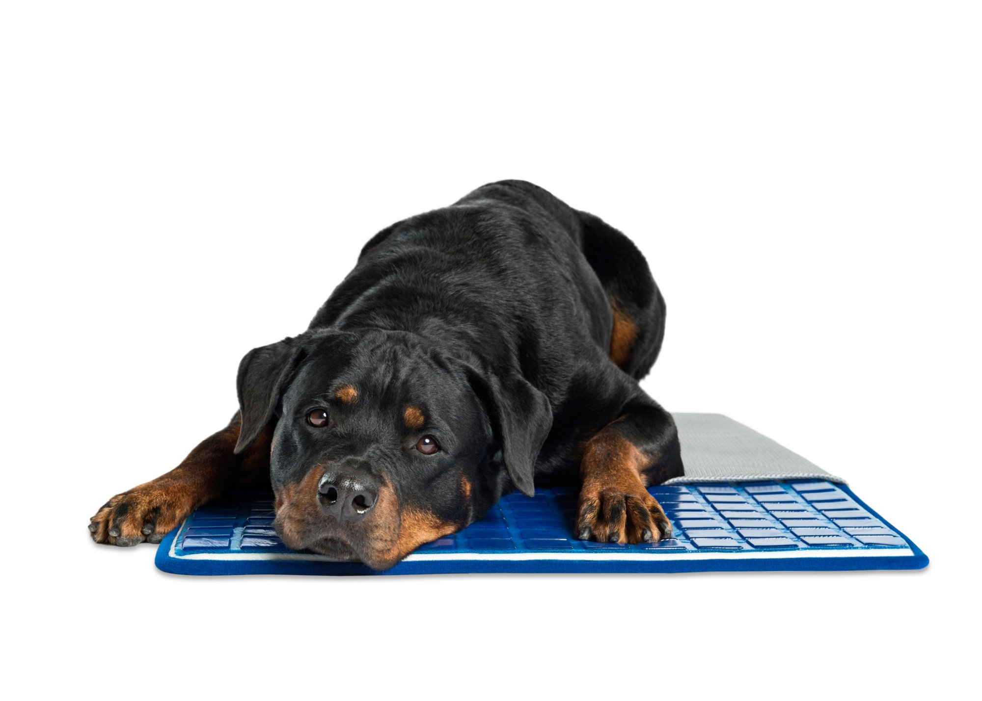 for mats tv cooling upcitemdb dogs pet comfort dog pooch self product mat upc image as cat cushion com seen on polar