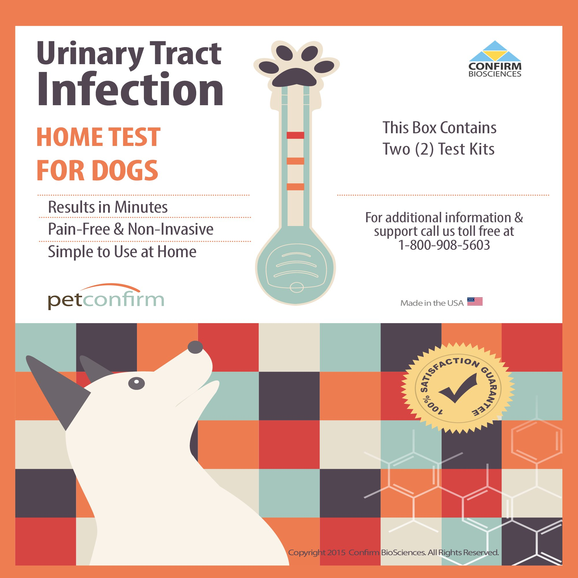 How Can You Tell If Your Dog Has A Uti