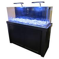 Fish tanks saltwater freshwater aquariums supplies for Best freshwater aquarium fish combination
