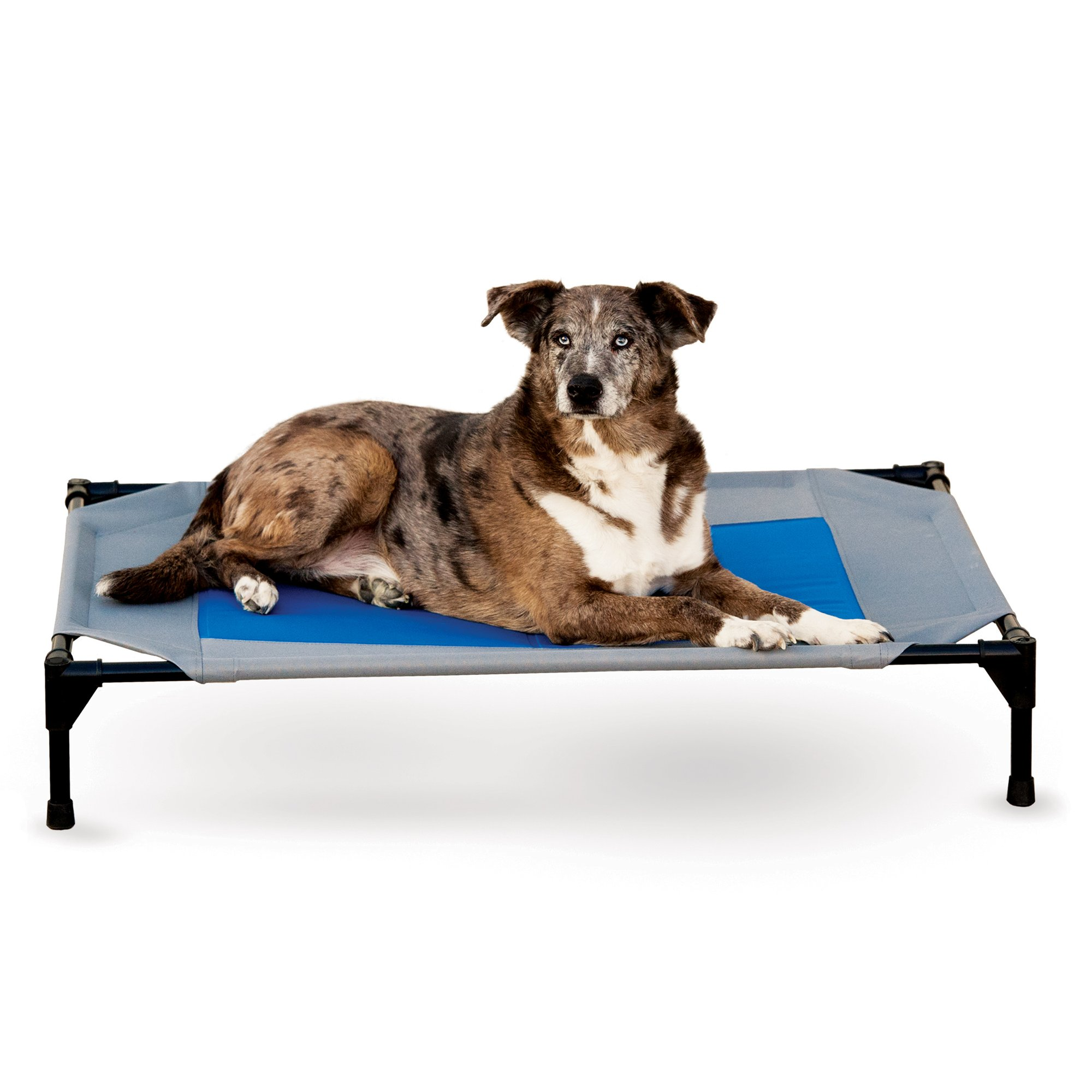 petco center and petcostore free hammock elevated cots beds shop bedding shipping category dog en hammocks