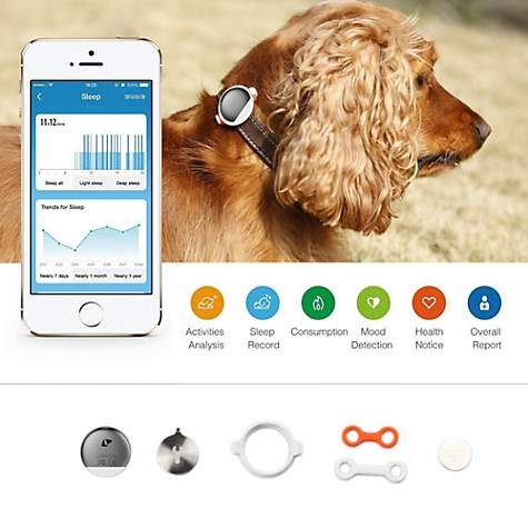 petkit blue smart activity monitoring pet tracker petco