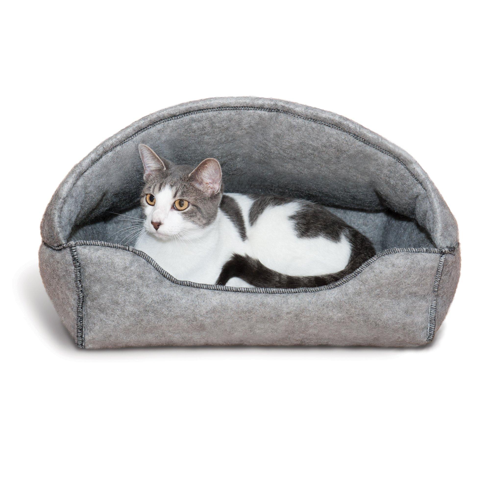 lynx cat pet